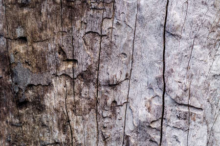 wood texture background: old wood texture abstract background