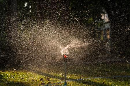 water sprinkler: A water sprinkler in a garden