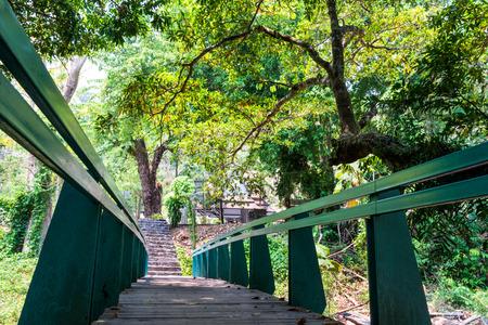 rainforest background: Closeup of bridge in rainforest background