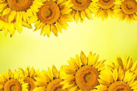 Bloemen achtergrond grens van gele zonnebloem.