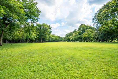 Mooie parkscène in openbaar park met groen grasgebied, groene boominstallatie en een partij bewolkte blauwe hemel