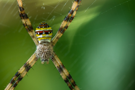 Spider on the web over green nature background Stock Photo
