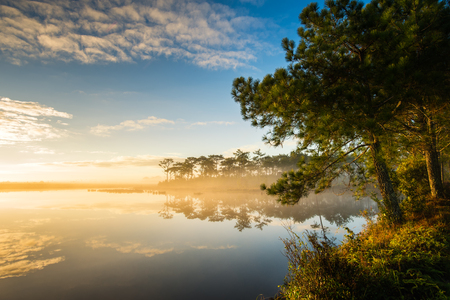 Mist over the lake with pine forest in morning, fog around the lake at sun rises landscape
