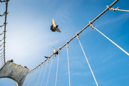 The wire metal rope bridge with dove on blue sky background