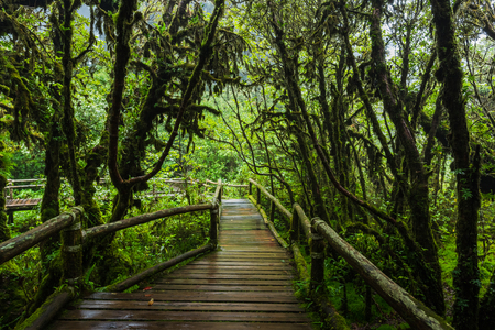 Wooden bridge walkway in to the rain forest at Ang Ka Nature trail in Doi Inthanon Nature Park, Chiang Mai, Thailand