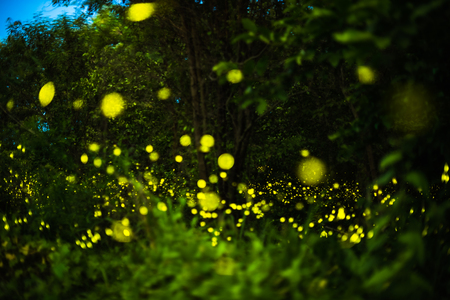 Abstract and magical image of Firefly flying in the night forest in Thailand Stock Photo
