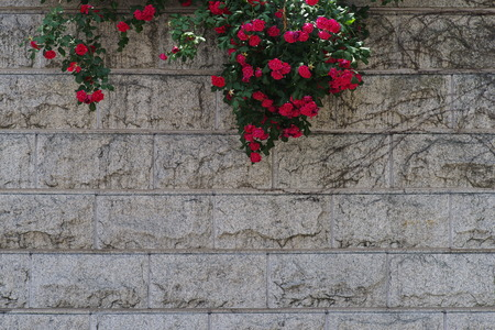 red wall: Red rose & marble wall