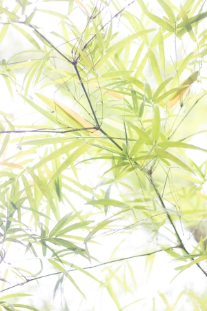 lightsome: Green bamboo background