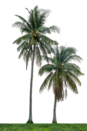 Isolated trees on white background Stock Photo
