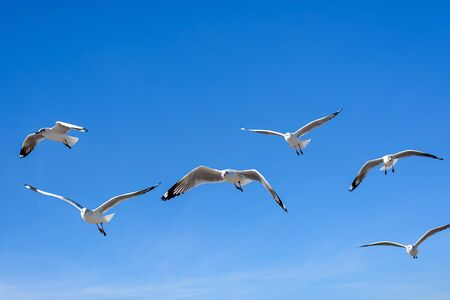 Seagulls flying on the blue sky