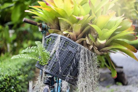 whimsy: Old bicycle with a basket of flowers at a public garden.