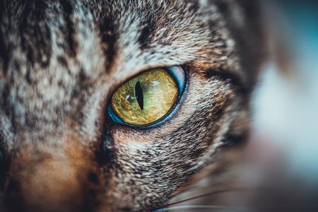 cat eye: Closeup Thai cat eye Stock Photo