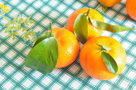 organic tangerines on checkered green tablecloth from above