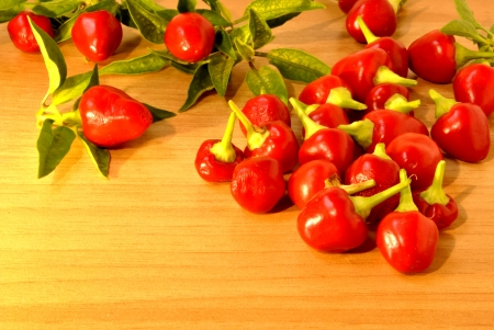 spicy plant: Spicy chilli freshly picked from the plant to put in a jar in olive oil to use as a sauce for pasta