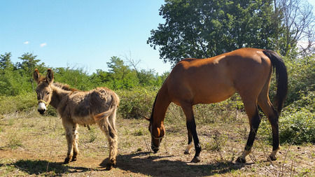 cavallo in corsa: donkey and horse together like two old friends