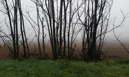 atmospheric phenomena: very dense fog reduces visibility