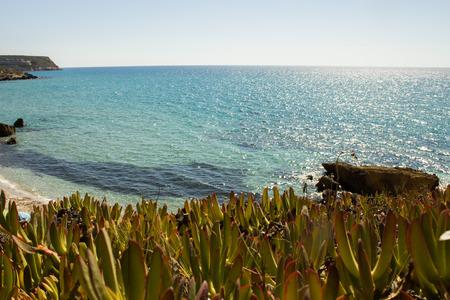 succulents that grow near the Mediterranean Sea