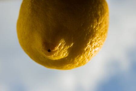 blimp: Lemon floating in the sky like a balloon Stock Photo