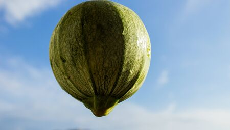 courgette floating in the sky like a balloon
