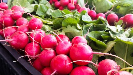 bunch of colorful red radishes for sale at a street market