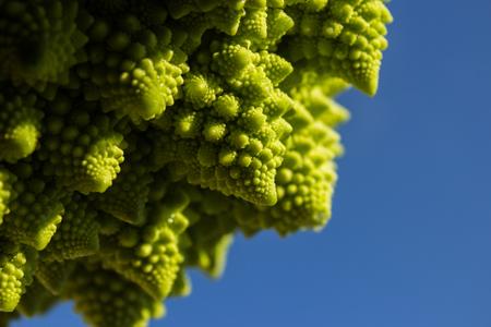 particular vegetable that grows through spirals