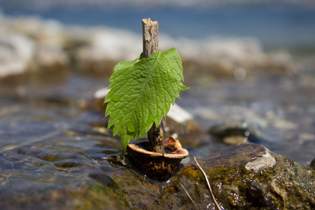 Small boat made of walnut shell and leaf