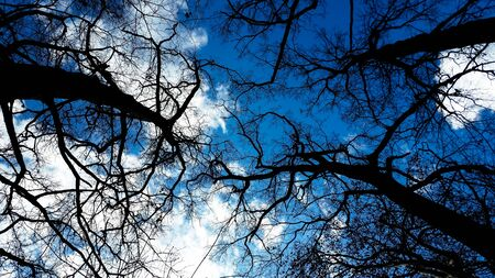 Bare trees in winter with blue sky