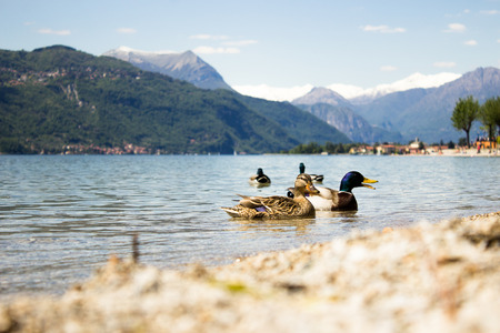 Pair of trolls in the alpine lake