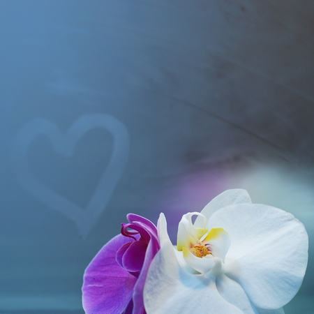dedication of love on the mirror with orchid photo