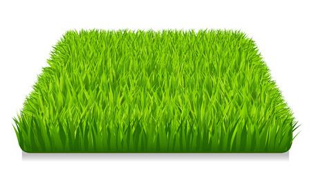 green grass: vector illustration of green grass
