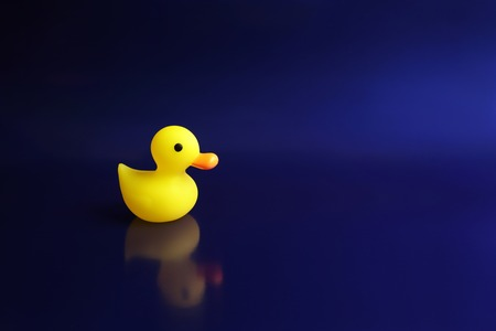 Yellow rubber duck swims on a blue background. - Image