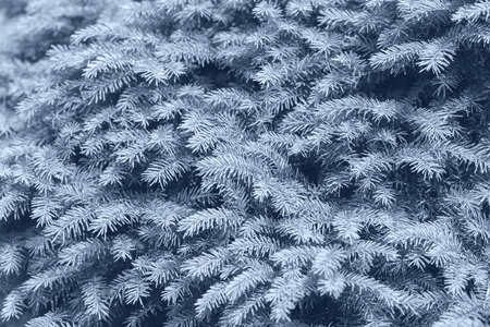 Background of Christmas tree branches. Skyway color. - Image