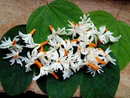 night queen or white flowers arranged randomly over the leaves