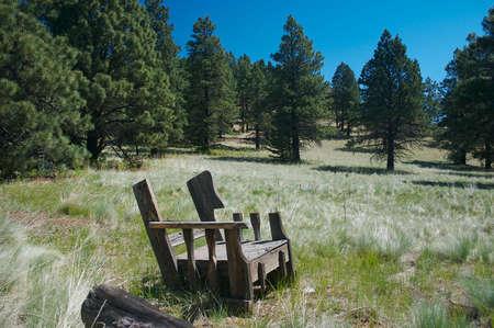 pinaceae: mountain chair