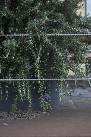 urban garden example