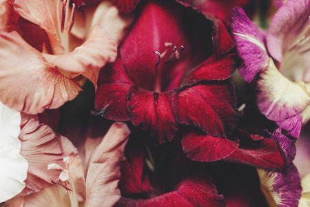 amazing wallpaper: beautiful gladiolus flowers close-up in different colors on wooden rustic background, arrangement concept, amazing wallpaper