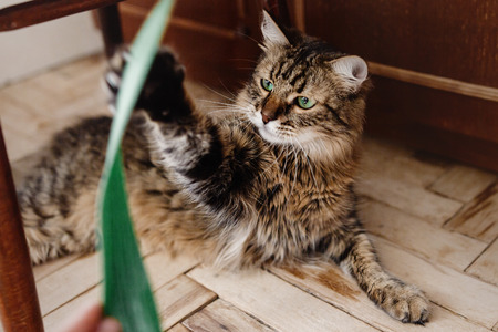 cat playing with green plant with funny emotions and green eyes look in home, cute moment, domestic pet Standard-Bild