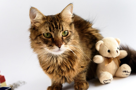 cute adorable cat and teddy toy on white background, family and care concept