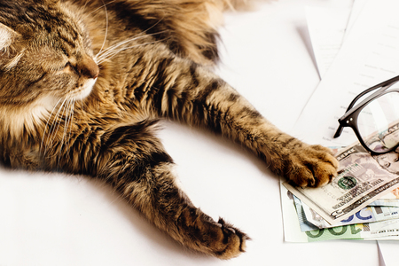 cute cat sitting on table with glasses phone and holding paw on money, working home or shopping online concept, space for text