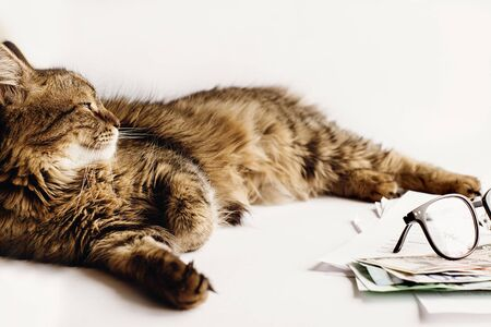 cute cat sitting on table with glasses phone and  money, working home or time for vacation concept, space for text