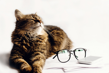 cute cat sitting sleeping on table with glasses phone and paper, working home concept, space for text Stock Photo