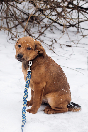 scared little brown puppy sitting alone in snowy cold winter park. adoption concept. save animals. space for text. sweet moment. sad eyes