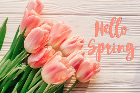 hello spring text sign on beautiful pink tulips on white rustic wooden background. flowers in soft morning sunny light with space for text. greeting card concept Stock Photo