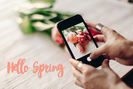 HI: hello spring text sign, hand holding phone taking photo of stylish flower flat lay, pink tulips on white wooden rustic background. instagram blogging photographer concept. space for text