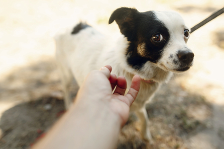 hand of man caress little scared dog from shelter posing outside in sunny park, adoption concept