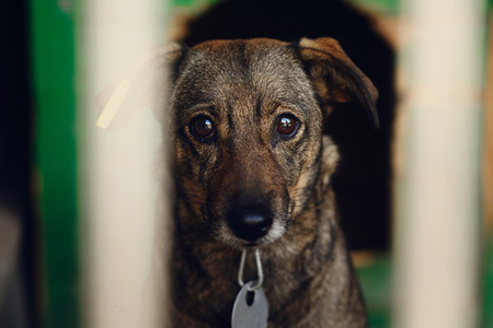Droevig uitziende ogen van puppy in schuilplaatskooi, ongelukkig emotioneel ogenblik, keur me concept, ruimte voor tekst goed Stockfoto - 75319614
