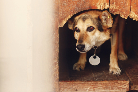 sad looking eyes of big dog in kennel shelter cage, sad emotional moment, adopt me concept, space for text