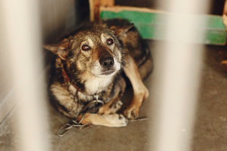 treated: scared dog in shelter cage with sad crying eyes , emotional moment, adopt me concept, space for text