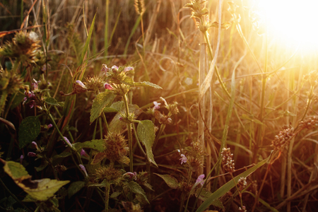 Schönen Weizen und Kräutern im Sommer Feld bei Sonnenuntergang, warmen, ruhigen Moment Standard-Bild - 75331393