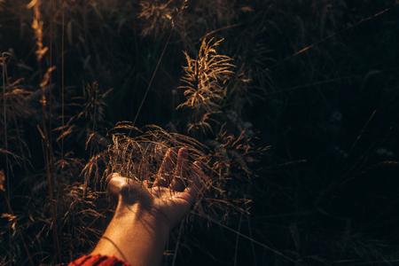 Hand mit wildem Kraut in den Sonnenuntergangstrahlen am Sommerfeld. Wiese unter herrlichem Sonnenschein. schöne Wiese Silhouette. atmosphärischer Moment. Tag der Erde Standard-Bild - 75710418